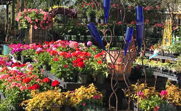 Annuals & Perennials