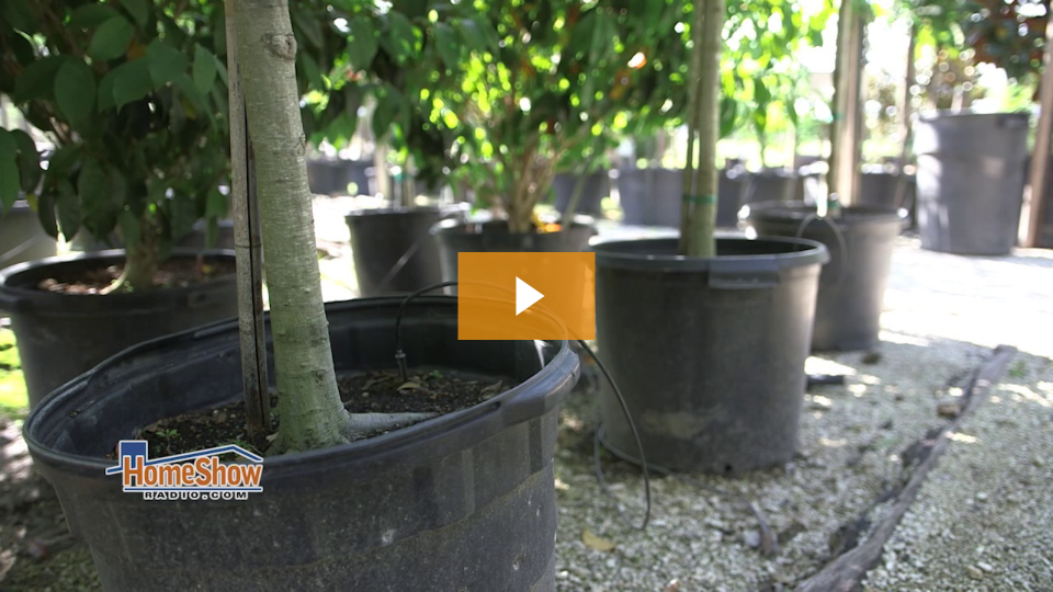 Get your tree right from the start: planting tips